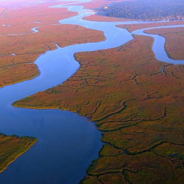 Savannah's precious wetlands from 1000 ft