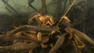 MF19-STILL-March-of-the-Newts2-WEB